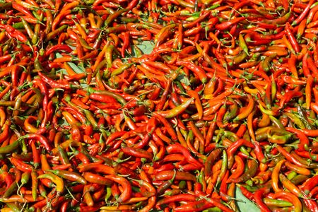 Several fresh red chilis or hot peppers