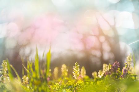 Photo pour Beautiful garden spring flowers - image libre de droit