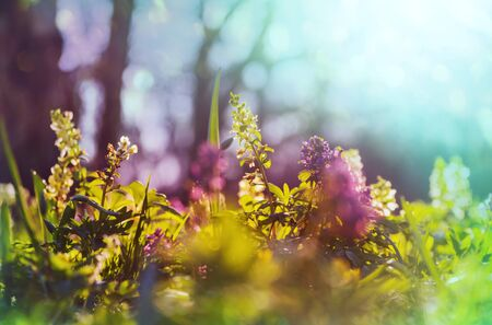 Photo for Beautiful garden spring flowers. Natural background. - Royalty Free Image