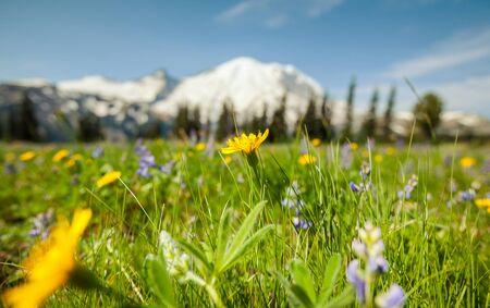 Photo pour Mountain meadow in summer season - image libre de droit