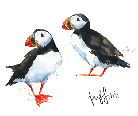 Two hand painted watercolor puffins isolated on white