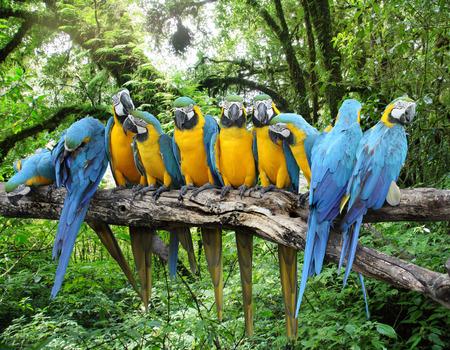 Rainforest Macaws