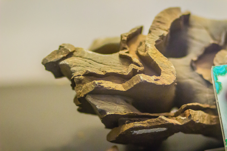 Folded rock from mining for education. Folds in rocks vary in size from microscopic crinkles to mountain-sized folds and occur singly as isolated folds and in extensive fold trains of different sizes.