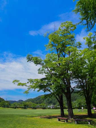 Photo pour A sunny Japanese park with lots of greenery - image libre de droit
