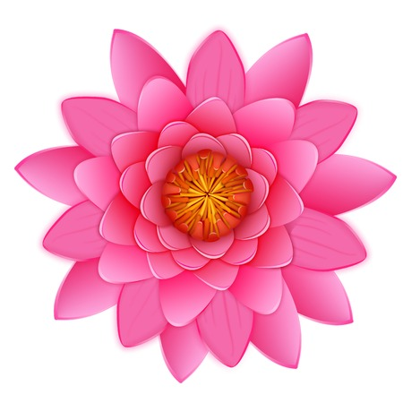 Beautiful pink lotus or waterlily flower isolated on white background. Vector illustration for your pretty design. Close up  blossoming bud in Japanese pond. Photo realistic image.