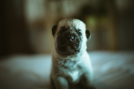 Image of cute little puppy closeup indoor.