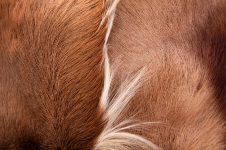 Pony skin and hair texture