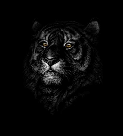 Illustration pour Portrait of a tiger head on a black background. Vector illustration - image libre de droit
