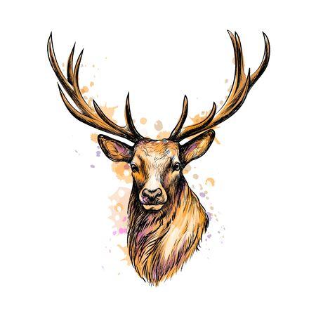 Illustration pour Portrait of a deer head from a splash of watercolor, hand drawn sketch. Vector illustration of paints - image libre de droit