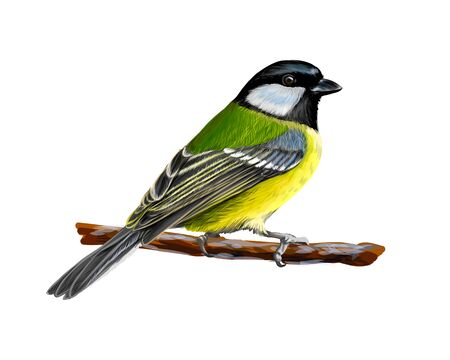 Illustration pour Portrait of a tit bird sitting on a branch on white background, hand drawn sketch. Vector illustration of paints - image libre de droit
