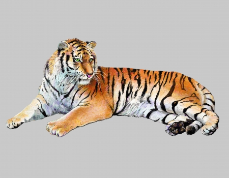 scetch colored drawing realistic illustration of tiger, isolated, vector version