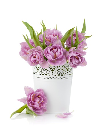 Pink tulips in metal flowerpot. Isolated on white background