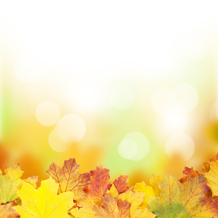 Autumn background with maple leaves and sunny bokeh