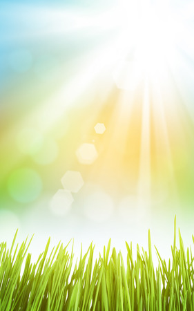 Photo pour Abstract sunny spring background with grass and sky - image libre de droit