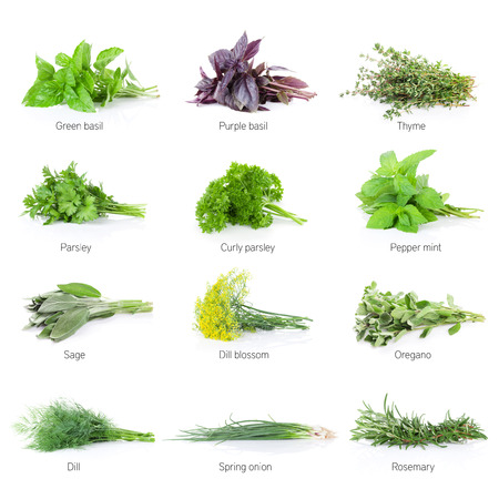 Photo for Fresh garden herbs set. Isolated on white background - Royalty Free Image