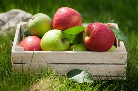 Photo for Fresh garden green and red apples in box. On outdoor grass meadow - Royalty Free Image