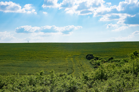 green weath field with forest in foreground and blue sky, backlight, Europe, Hungary / agriculture and countryside - spring