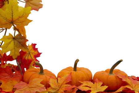 Colorful Fall Border, Three small pumpkins on fall leaves isolated on whiteの写真素材