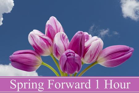 Some tulips with blue background and text Spring Forward 1 Hour