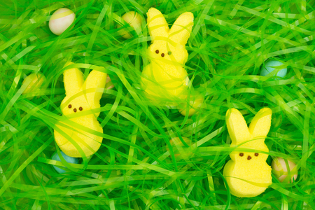 Photo for Easter grass with hidden eggs and bunnies background for your Easter holiday message - Royalty Free Image