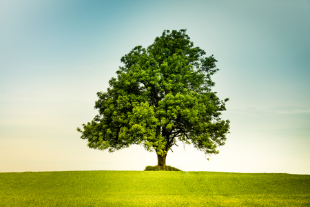 Foto de Lonely tree in the center on a green field with a  retro feeling - Imagen libre de derechos