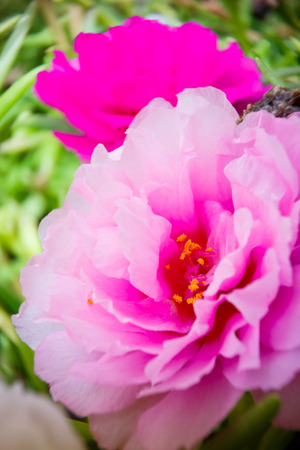 close up image pink flower on natural background photo