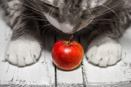 Red Apple And Cat On White Wooden Tableの写真素材