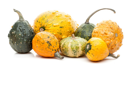 set of small tiny pumpkins isolated on white backgroundの写真素材