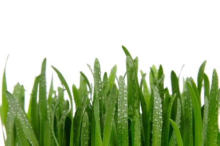 Green grass isolated on the white background.