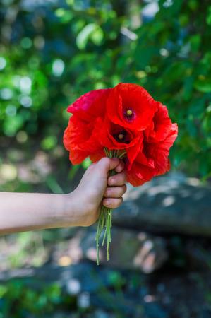 Photo pour Hand giving a bouquet of poppies - image libre de droit