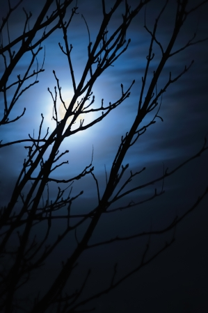 Full moon in foggy dark night, leafless trees silhouettes and clouds, halloween theme vertical background, scary moonlight scenery, vertical
