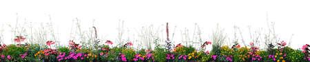Photo for Flowerbed Flower Blooming Annual Flowers Bed Isolated Panorama Closeup Horizontal Panoramic Cardinal, Begonias, Balsams, Gauras, Marigolds, Verbenas, Wandflowers, Red, Pink, White,Yellow Garden Banner - Royalty Free Image