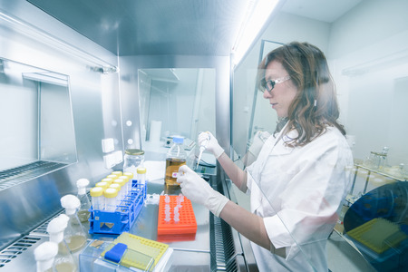 Female life scientist researching in laboratory, pipetting cell culture medium samples in laminar flow. Photo taken from laminar interior.