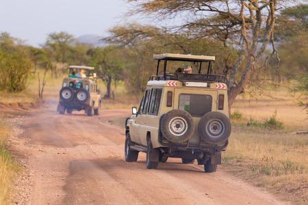 Open roof 4x4 vehicles in african wildlife safari.