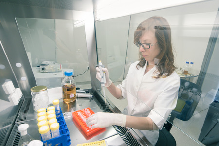 Female scientist researching in laboratory, pipetting cell culture medium samples in laminar flow. Life science professional grafting bacteria in the pettri dishes. Photo taken from laminar interior.