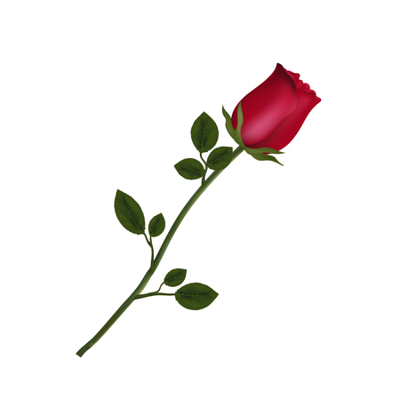 Illustration pour Vector illustration of photo-realistic, highly detailed flower of red rose isolated on white background. Beautiful bud of red rose on long stem. Clip art for valentines, love, wedding, design. - image libre de droit