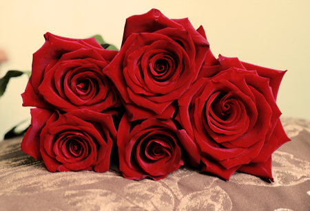 Foto de Beautiful Bunch of Dark Red Roses on Pillow. Front View. Happy Valentines Day, Wedding, Love, Birthday Backdrop for Greeting Card, Wallpaper, Gift. Retro Vintage Style. - Imagen libre de derechos