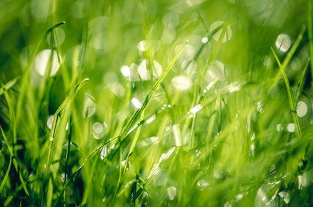 Photo pour close up of green bright wet grass with bokeh effect - image libre de droit