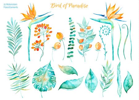Vector floral set.Colorful collection with tropical leaves and flowers of Paradise, watercolor drawing. Tropical leaves set. Set of floral elements for your compositions.のイラスト素材