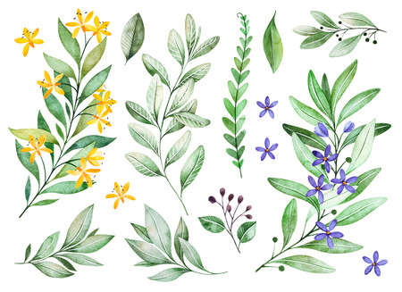 Foto de Watercolor greens collection.Texture with flowering branches, small flowers, leaves, fern leaves, foliage.Perfect for wedding, invitations, greeting cards, quotes, pattern, bouquet - Imagen libre de derechos