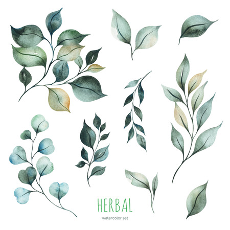 Photo for Watercolor Herbal collection.Texture with green leaves and branches.Perfect for wedding, invitations, greeting cards, quotes, pattern, bouquet, logos, Birthday cards and more - Royalty Free Image