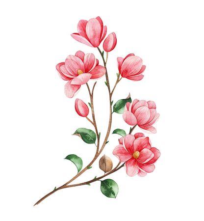 Photo pour Beautiful watercolor magnolia blossom branches on white - image libre de droit