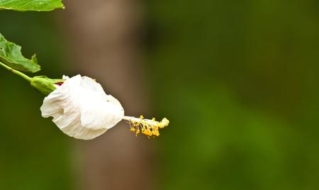 Photo pour beautiful flowers - image libre de droit
