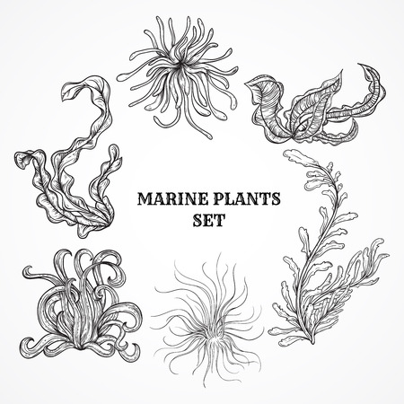 Illustration pour Collection of marine plants, leaves and seaweed. Vintage set of black and white hand drawn marine flora. Isolated vector illustration in line art style.Design for summer beach, decorations. - image libre de droit