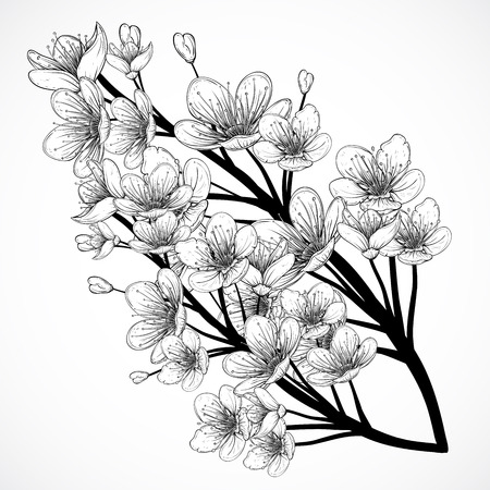 Ilustración de Cherry tree blossom. Vintage black and white hand drawn illustration in sketch style. Isolated elements. - Imagen libre de derechos