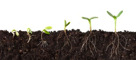 Cutaway Sequence of Plants Growing in Dirt - Roots Showing