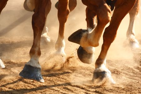 Close-up view on the hooves of horses running through a dusty field.