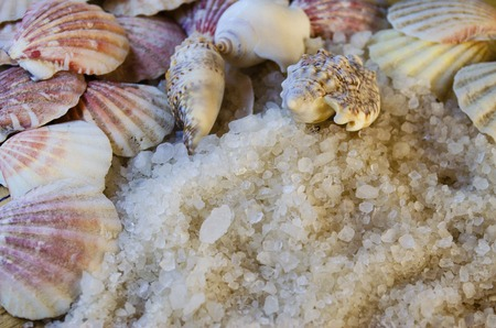 White large sea salt close-up and seashells