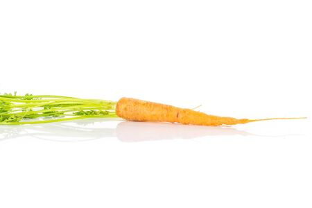 One whole fresh orange carrot with greens isolated on white background