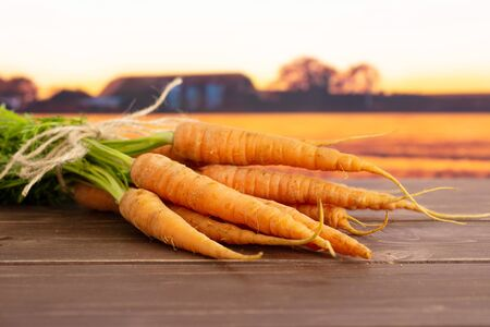 Lot of whole fresh orange carrot bunch with greens tied by jute with autumn field in background